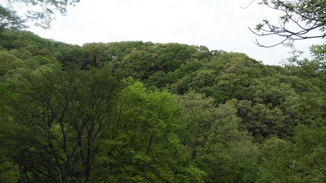 ここだけ見るとどこかの山の中みたいな長沼公園