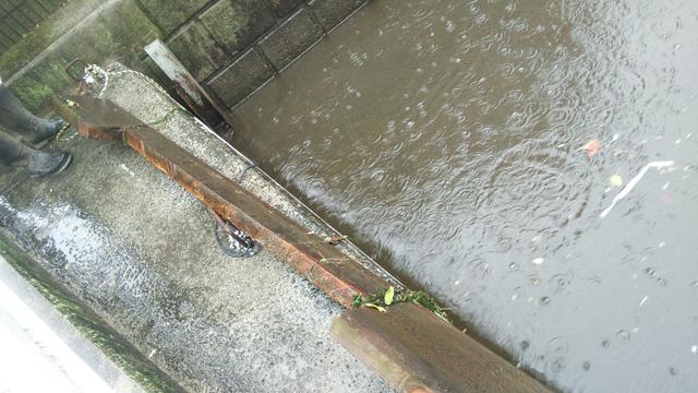 大雨になって来たので上田用水路の堰を取り払う