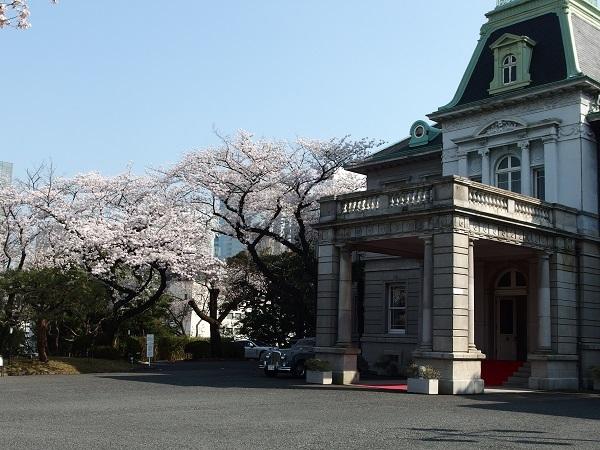 Takanawa_sakura2_600.jpg