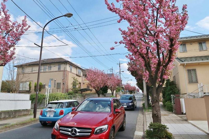 八重桜03 (800x533)