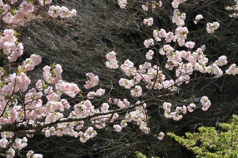 07IMG_0552佐野の福禄寿 (800x533)