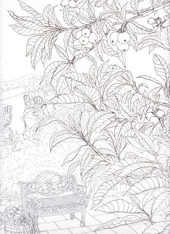 枇杷の葉陰