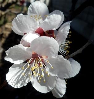 花 (12)
