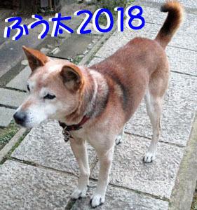 2018fuu01.jpg