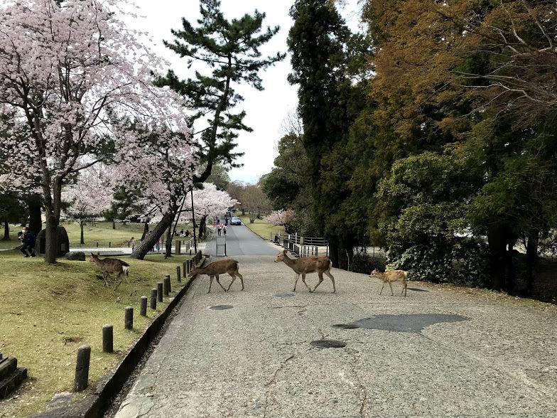 奈良1日目は若草山登ったよ♪