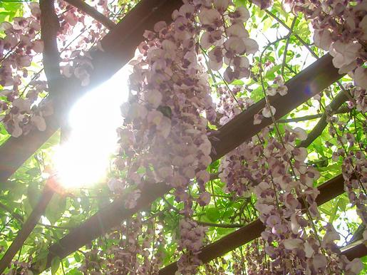 300603_YurigaharaPark4.jpg