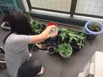 家庭菜園5