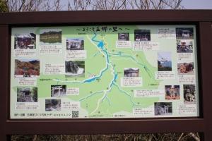 豊稔池の桜1