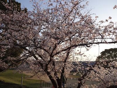 桜の不動産012
