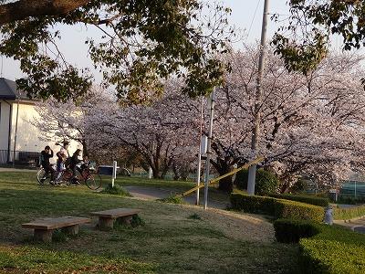 桜の不動産003