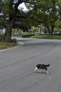 Tak The Cat