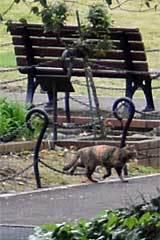 Goma/Gabby The Cat