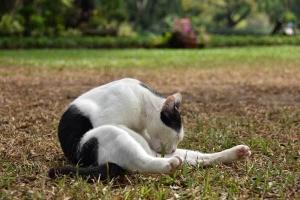 Lumpini Park Cat(s) Bangkok Thailand