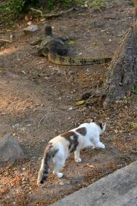 Lumpini Park Cat Bangkok Thailand