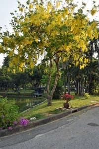 Lumpini Park Cat Bangkok Thailand, Golden Shower