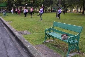 Doing Exercise Lumpini Park Bangkok