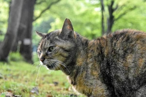 Hana The Cat