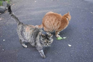 Chappy The Cat and Goma/Gabby