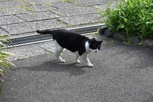 Kuma The Cat