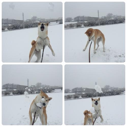 雪遊び1 (2)
