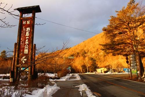 樹氷まつり(西湖・野鳥の森公園)