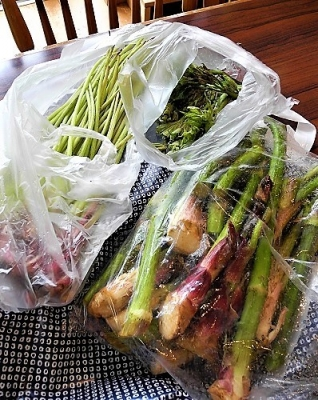 20180507山菜お福分け