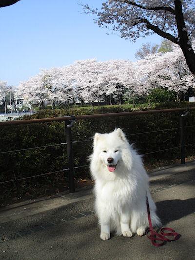 blog6046.jpg