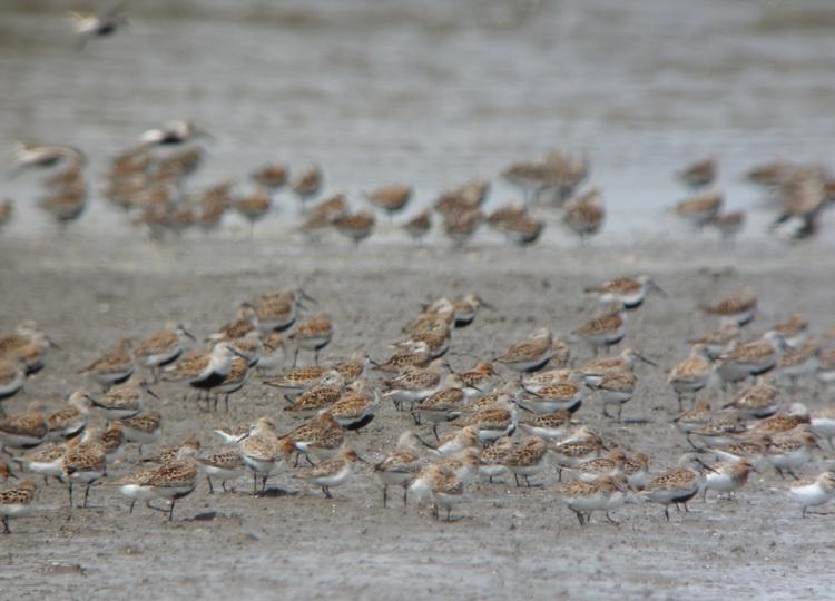 数多いる野鳥の群れ