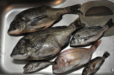 fish20180530a.jpg