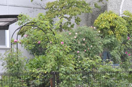 garden20180502-2.jpg