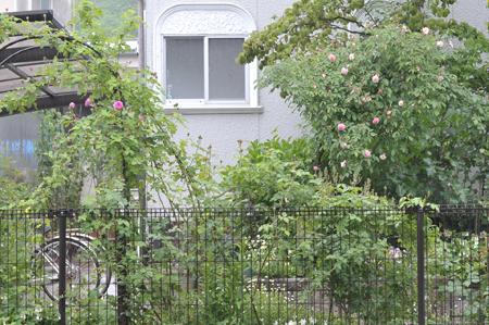 garden20180502-3.jpg