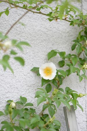 naniwa20180423.jpg