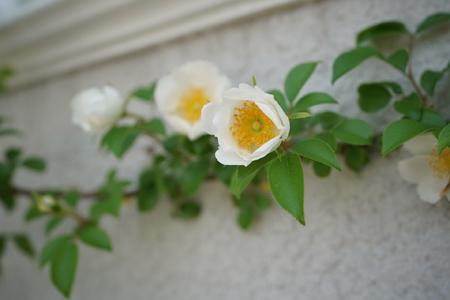 naniwa20180426-10.jpg