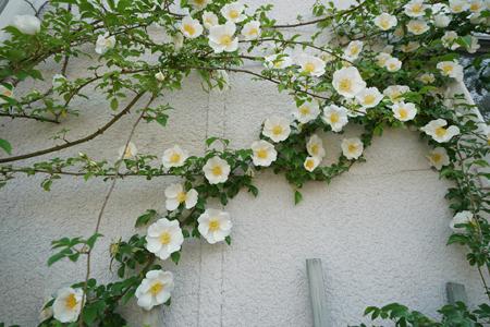 naniwa20180426-13.jpg