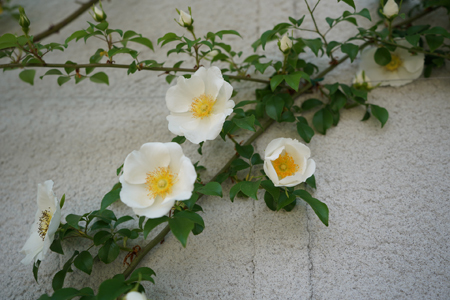 naniwa20180426-4.jpg