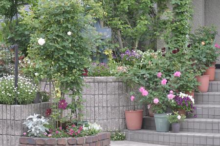 roses20180430-1.jpg