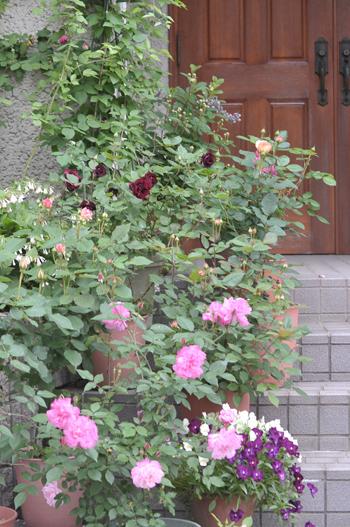 roses20180430-3.jpg