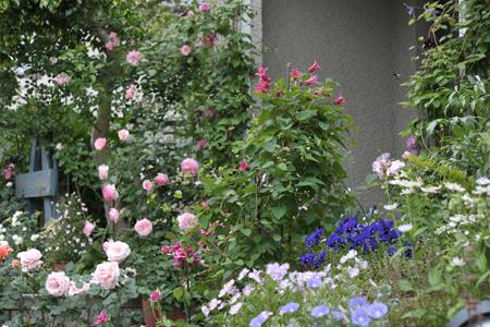 roses20180517-3.jpg