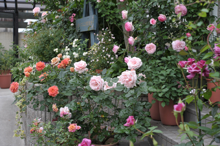 roses20180517-4.jpg