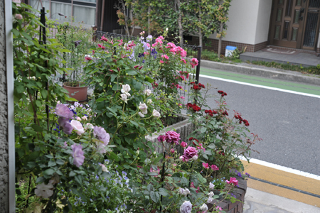 zenkei20180517-10.jpg