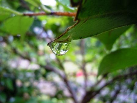 雨だれ4(2018-05-28)