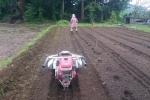 ジャガイモの定植完了