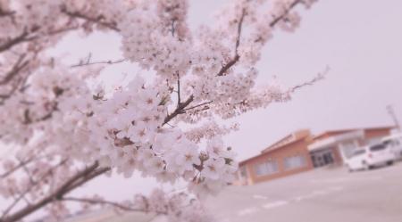 千葉ブログ3