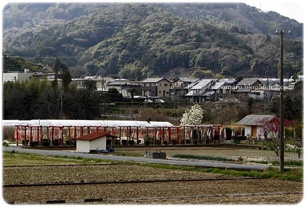 sayomaru23-240.jpg