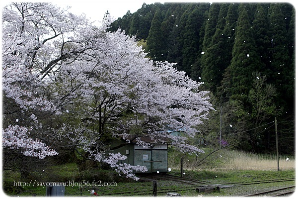 sayomaru23-698.jpg