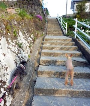階段きつい