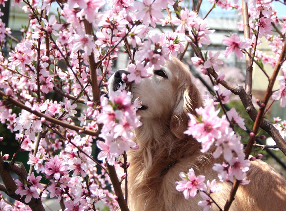 3月29日の桃とヒット(1)