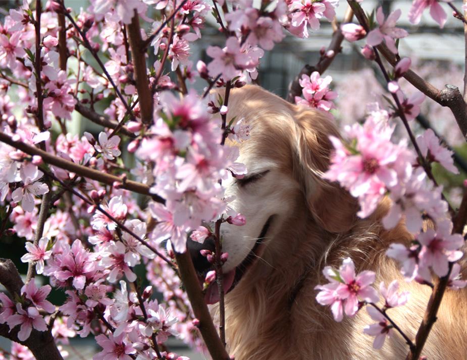 3月29日の桃とヒット(2)