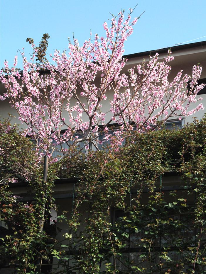 3月29日の桃とヒット(5)