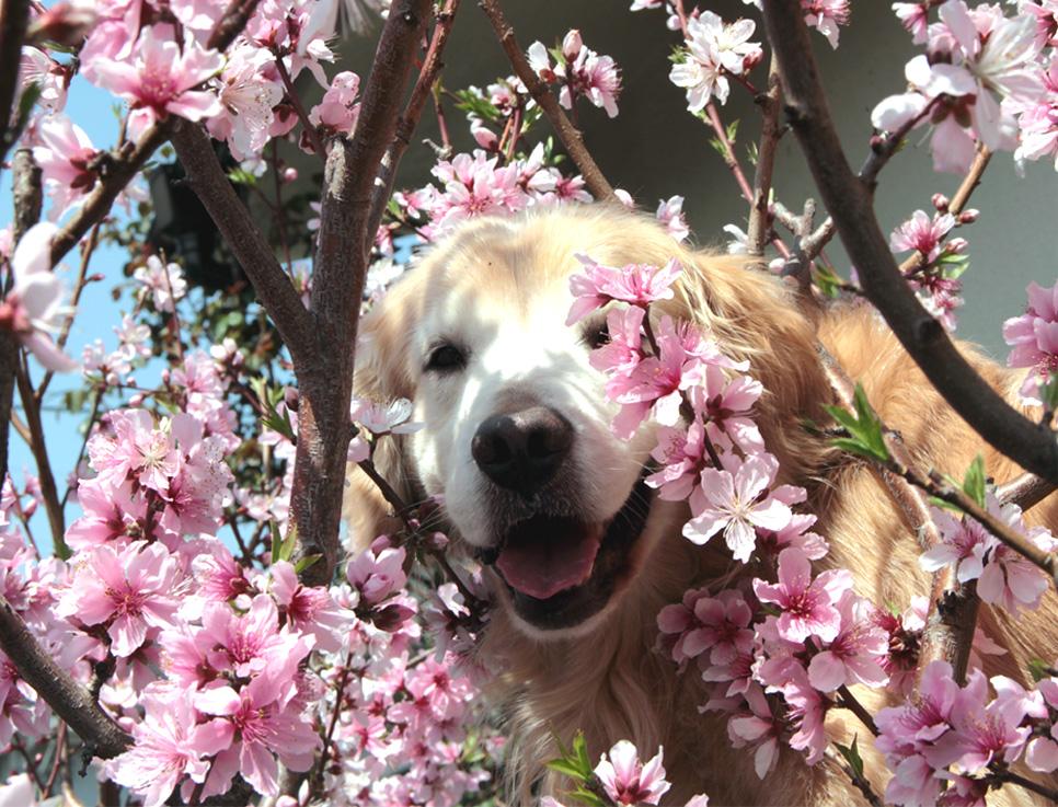 3月29日の桃とヒット(7)